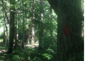 WoodsBlaze2