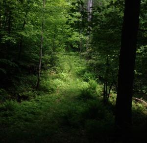 Trails5