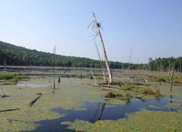 3.wetland