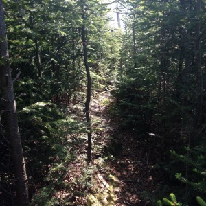 Trail toward Bradbury