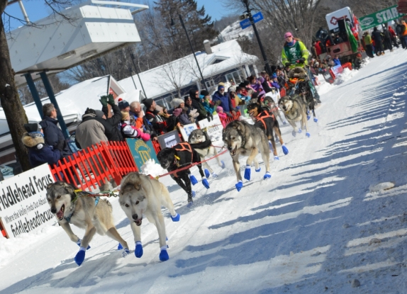 dogsled2